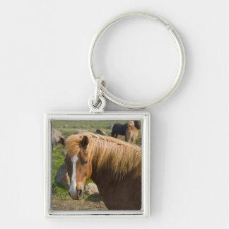 北東アイスランドのアイスランドの馬 キーホルダー