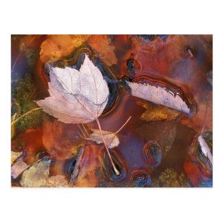 北東米国水溜の紅葉との ポストカード