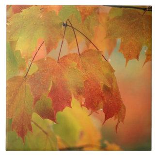北東米国雨のかえでの葉。 信用次のように: タイル