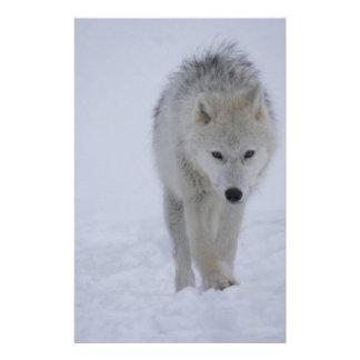 北極オオカミ 便箋
