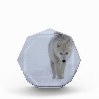 北極オオカミ 表彰盾
