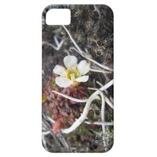 北極花 iPhone SE/5/5s ケース