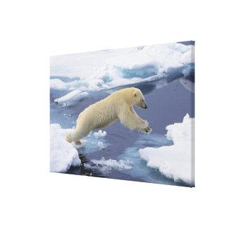 北極、スバールバルの伸びている白くま キャンバスプリント