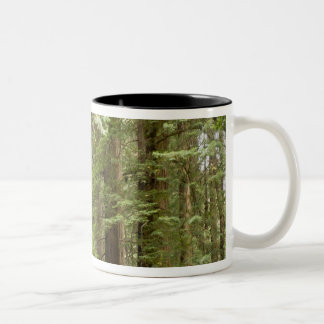 北Muirの森の国有記念物 ツートーンマグカップ