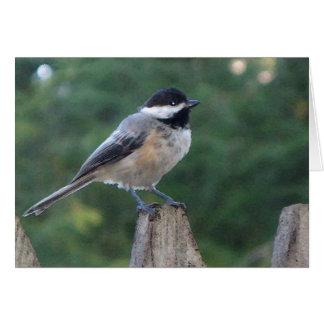 北NJまたはニュージャージーの黒い帽子の《鳥》アメリカゴガラ カード