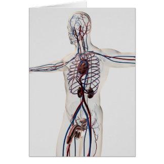 医学のイラストレーション: 男性の生殖システム3 カード