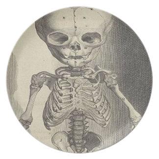 医学の骨組 プレート