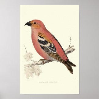 十字手形の鳥 ポスター