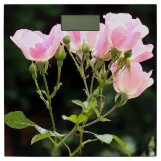 午前中ピンクのバラ 体重計