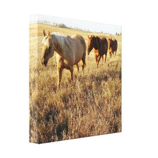 午後の馬のキャンバス キャンバスプリント