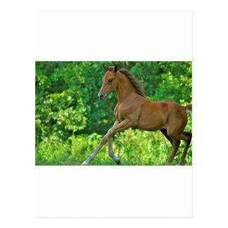 半分アラビアの子馬 ポストカード