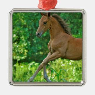 半分アラビアの子馬 メタルオーナメント