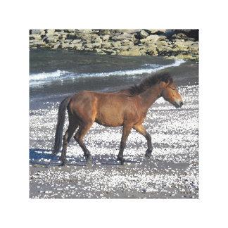 南にデボンのビーチのDartmoorの子馬の小走りに走ること キャンバスプリント