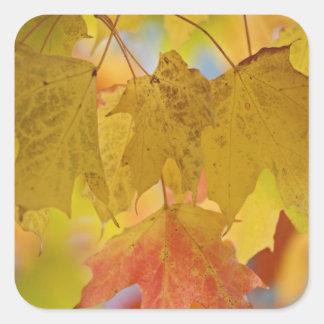 南の赤くおよび黄色のかえでの葉、 スクエアシール