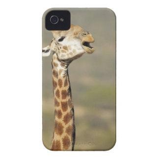 南アフリカのキリン(Giraffaのcamelopardalis Case-Mate iPhone 4 ケース