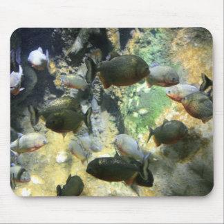 南アフリカのピラニアの魚のマウスパッド マウスパッド