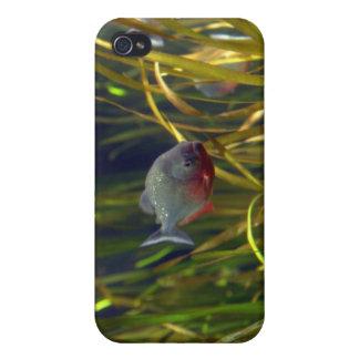 南アフリカのピラニアの魚のiPhoneの場合 iPhone 4 カバー