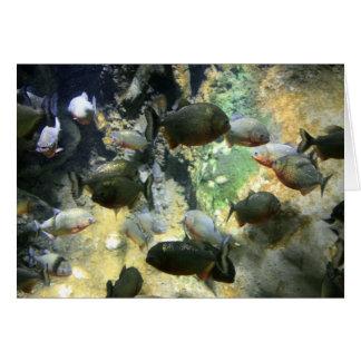 南アフリカのピラニアの魚カード カード