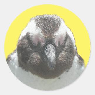 南アフリカのペンギンの顔のステッカー ラウンドシール
