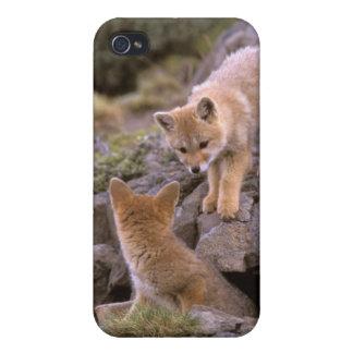 南アフリカの灰色キツネ(Lycalopexのgriseus)の組 iPhone 4/4S Cover