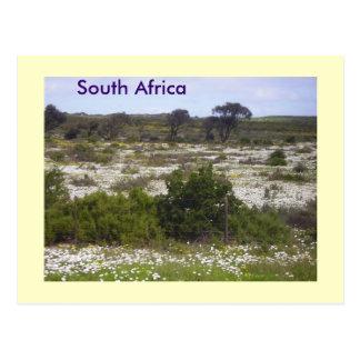 南アフリカの野生花 ポストカード