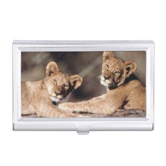 南アフリカ共和国のライオンの子 名刺入れ