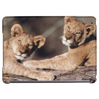 南アフリカ共和国のライオンの子 iPad AIRケース
