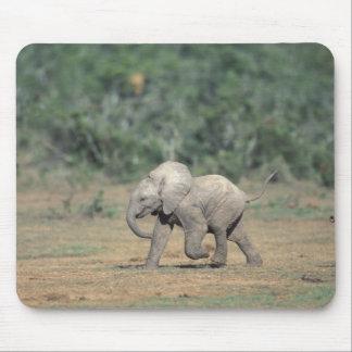 南アフリカ共和国のAddo象の国立公園。 ベビー マウスパッド