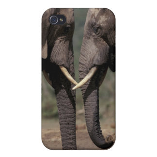 南アフリカ共和国のKalahariオリックスNPのオリックスの iPhone 4 Cover
