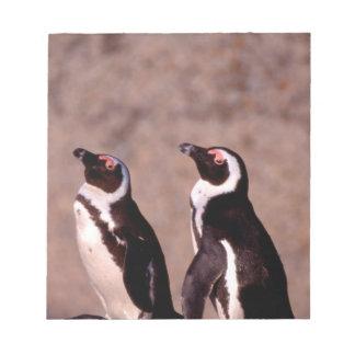 南アフリカ共和国のSimonsの町。 ろばペンギン2 ノートパッド