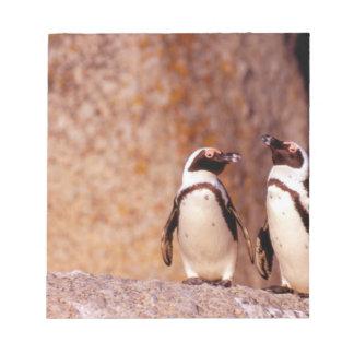 南アフリカ共和国のSimonsの町。 ろばペンギン3 ノートパッド