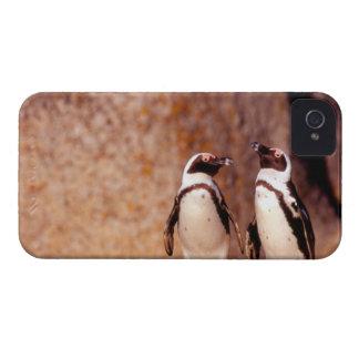 南アフリカ共和国のSimonsの町。 ろばペンギン3 Case-Mate iPhone 4 ケース
