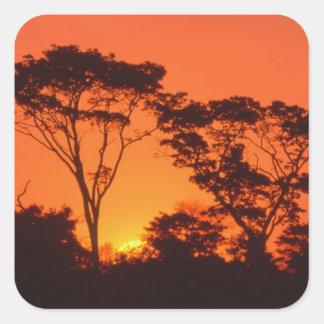 南アフリカ共和国。  アフリカの日没 スクエアシール