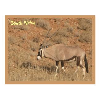 南アフリカ共和国 ポストカード
