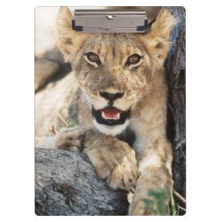 南アフリカ共和国、Kalahariのオリックスの国立公園4 クリップボード