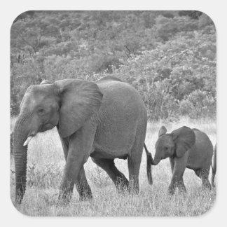 南アフリカ象の系列 スクエアシール