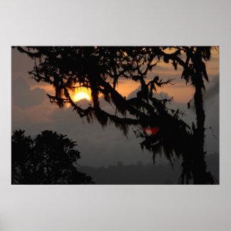 南アメリカ、エクアドルの雲の森林場面 ポスター