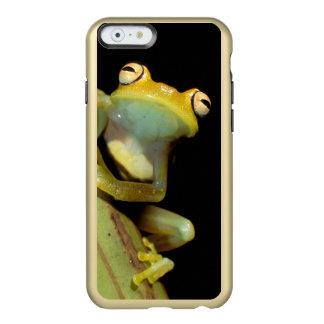南アメリカ、エクアドル、アマゾン。 アマガエル(アマガエル属 INCIPIO FEATHER SHINE iPhone 6ケース