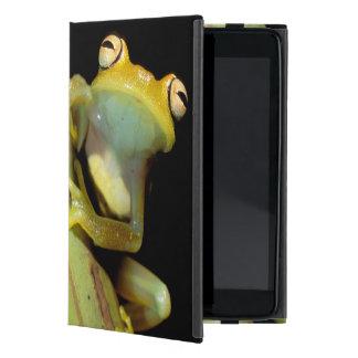 南アメリカ、エクアドル、アマゾン。 アマガエル(アマガエル属 iPad MINI ケース