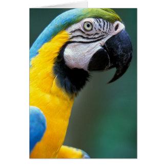 南アメリカ、ブラジルのIguacu Natioanl公園、 カード