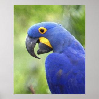 南アメリカ、ブラジル、Pantanal。 絶滅寸前 ポスター