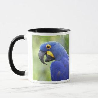 南アメリカ、ブラジル、Pantanal。 絶滅寸前 マグカップ