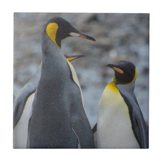 南ジョージア。 非常に高いキングペンギン タイル