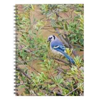南ヤマモモのアオカケス ノートブック