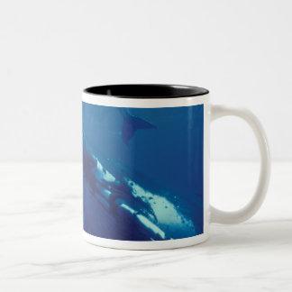 南太平洋、トンガ。 ザトウクジラおよび子牛 ツートーンマグカップ