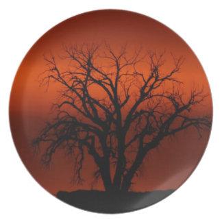南朝鮮の日没の冬の木 プレート