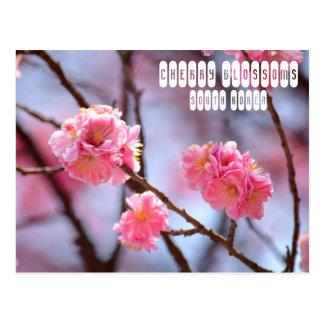 南朝鮮の桜 ポストカード