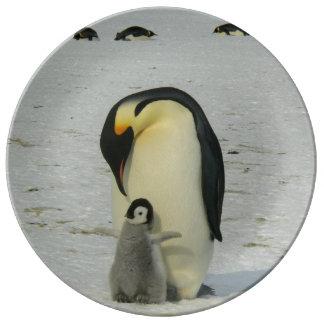 南極ペンギンのひよこの雪のビーチの鳥の海 磁器プレート