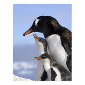 南極半島、Neko港、Gentoo ポストカード