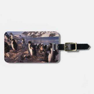 南極大陸のアデリーペンギンのひよこ ラゲッジタグ